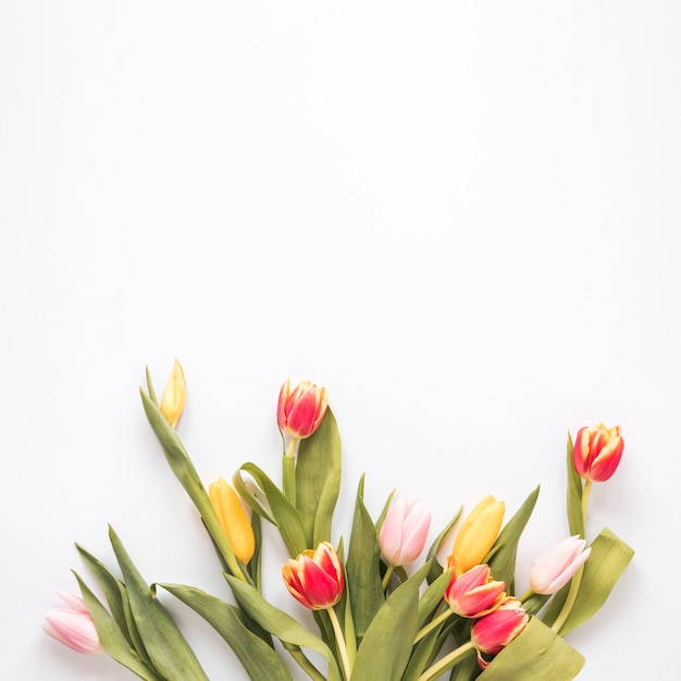 Bunch of fresh bright tulips with green leaves Free Photo