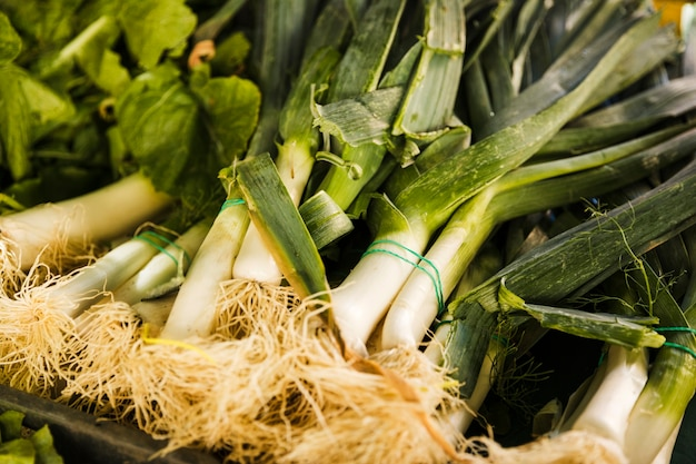 Bunch of fresh leek vegetable in crate at market Free Photo
