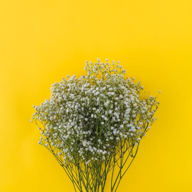 Bunch of gypsophila on yellow background Free Photo