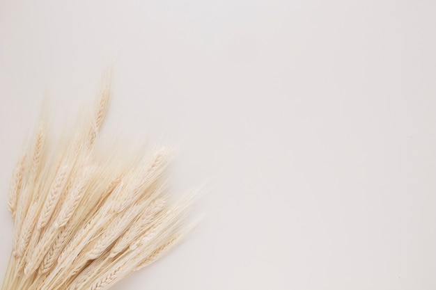 Bunch of many wheat sprigs Free Photo
