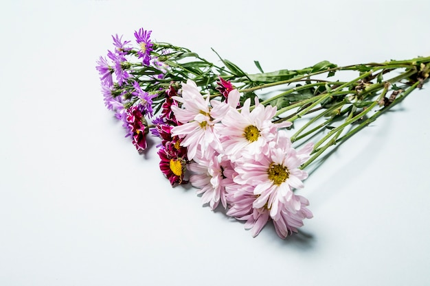 Bunch of multicolored daises Free Photo