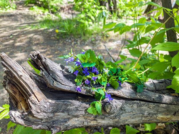 森の木の切り株に青い野花の束 Premium写真