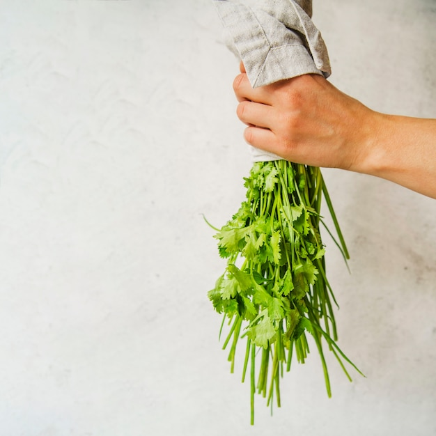 Bunch of parsley in person's hand on white background Free Photo