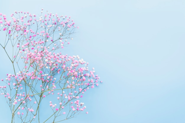 Bunch of pink flower twigs Free Photo