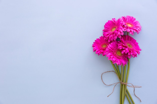 Bunch of pink gerbera flowers on colored background Free Photo