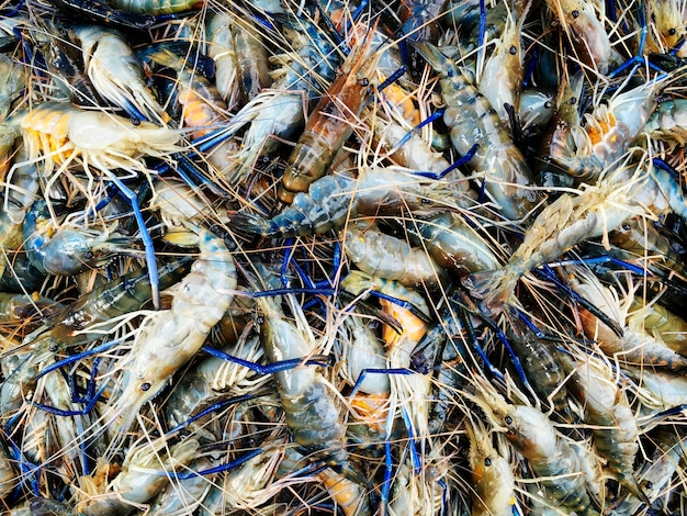 A bunch of shrimp Free Photo