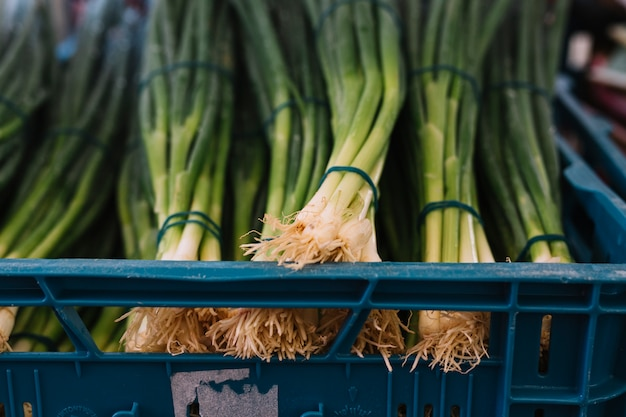 Bundle of spring onions in crate Free Photo