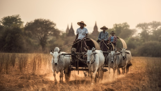 Burmese rural man driving wooden cart with hay on dusty road drawn by two white buffaloes. Premium Photo