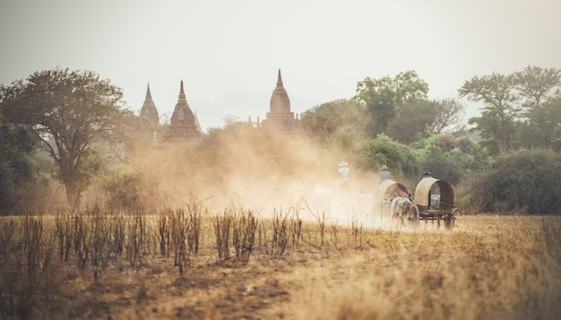 Burmese rural man driving wooden cart with hay on dusty road drawn Premium Photo