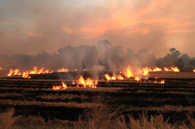 Burn dry straw in the field on the side of the road in thailand Premium Photo
