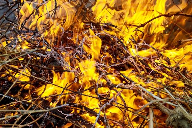Burn waste fire flame and smoke.global warming concept Premium Photo