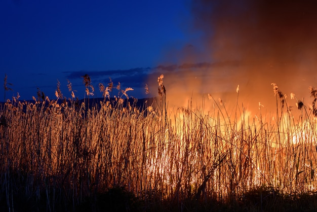 Burning fire at night on the reeds. smoke pollution. Premium Photo