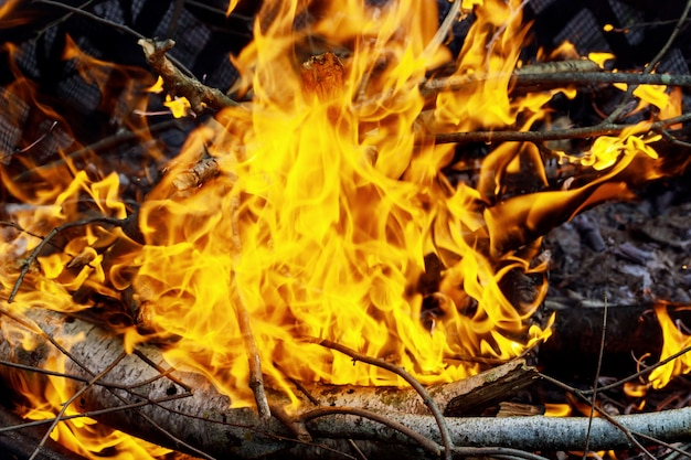 Burning of thin dry grass during incendiary fire, close-up Premium Photo