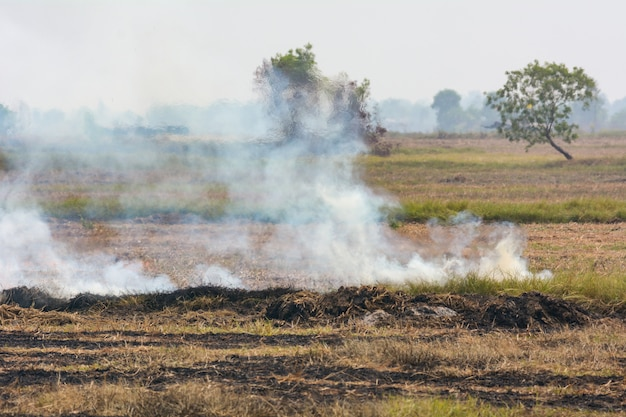 Burning weeds in the fields is one of the causes of pollution smoke Premium Photo