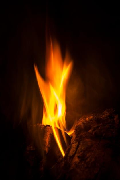 Burning wood trunks Free Photo