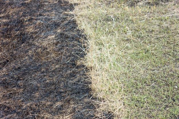 Burnt grass in spring Premium Photo