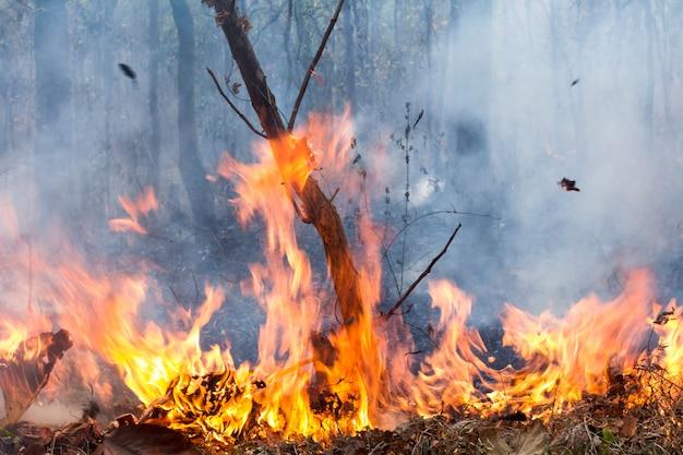 Bush fire destroy tropical forest Premium Photo