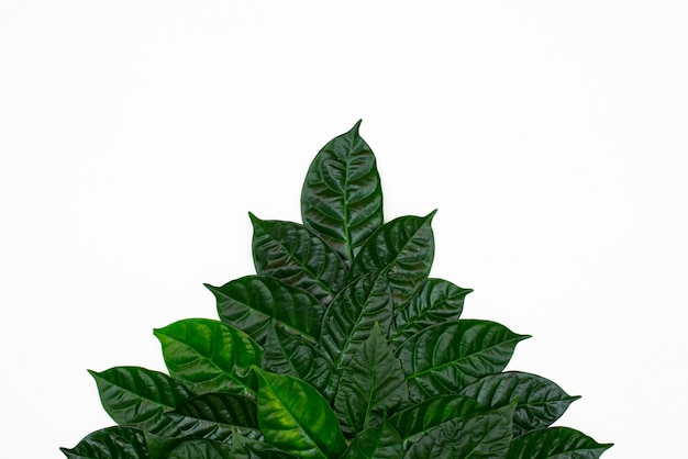 A bush of green leaves on white isolated background. Premium Photo