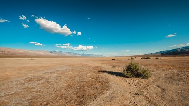 カリフォルニア州デスバレーの砂漠の茂み 無料写真