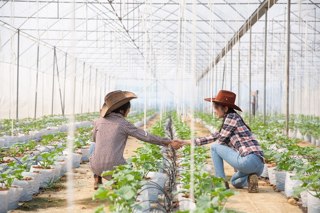 Business agreement shaking hands in a melon plantation Free Photo
