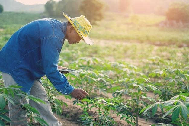 Businessman farmer holding tablet standing in cassava field. smart farmer concept. Premium Photo