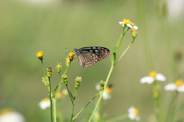 Butterflies and flowers in a beautiful garden. Premium Photo