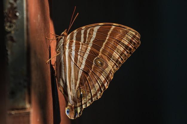 蝶、昆虫、マクロ昆虫 Premium写真