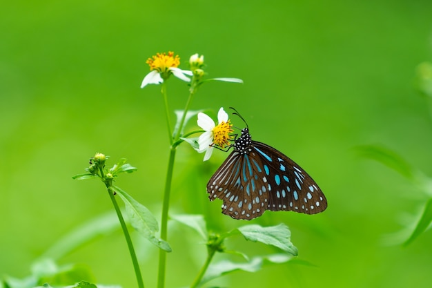 Butterfly looking for nectar Premium Photo