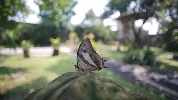 Butterfly in the morning Premium Photo