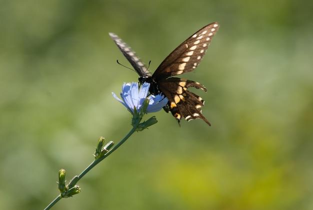 Бабочка на голубом цветке Бесплатные Фотографии