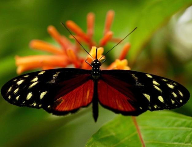 Бабочка на цветке Бесплатные Фотографии