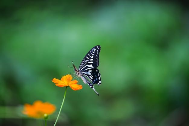 Бабочка на оранжевый цветок Бесплатные Фотографии