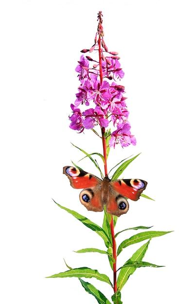 白い背景の上の花を蝶します。 Premium写真
