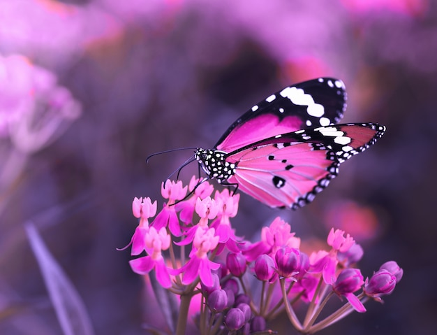 Бабочка на оранжевом цветке в саду Premium Фотографии