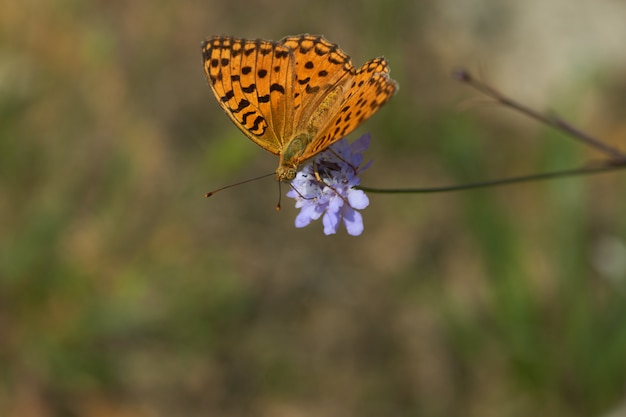 Бабочка на фиолетовом цветке Premium Фотографии