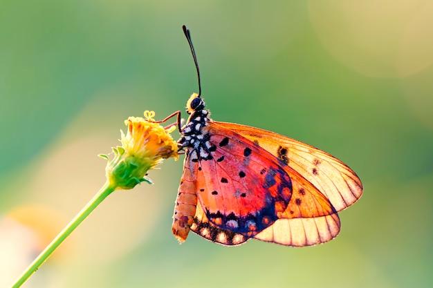 Бабочка на цветке Premium Фотографии