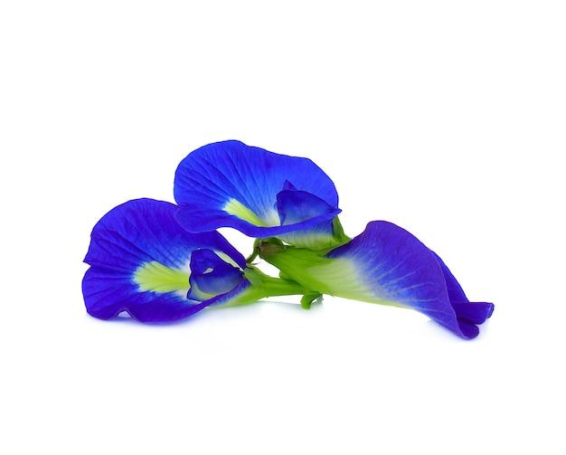 白にチョウマメの花が分離 Premium写真