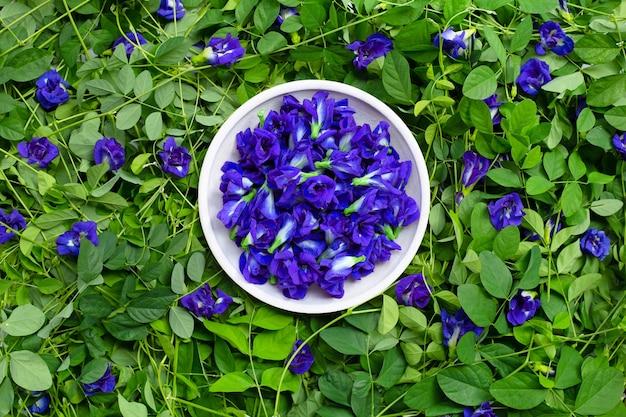蝶エンドウ豆またはブルーピースの花。上面図 Premium写真