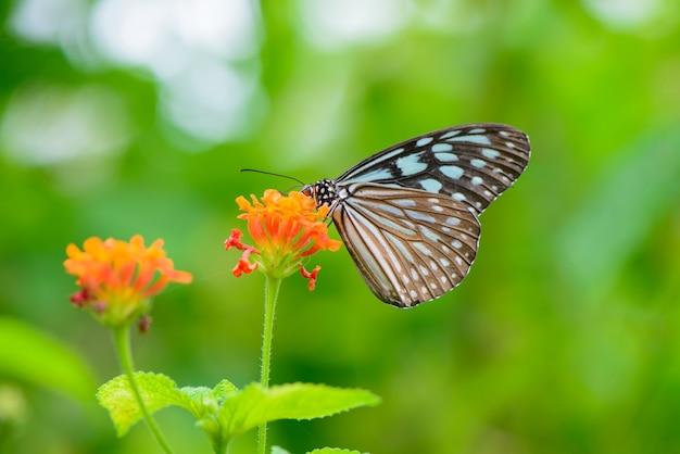 Бабочка сидит на цветке Бесплатные Фотографии