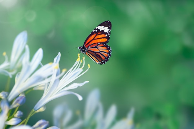 Butterfly in the wild Free Photo