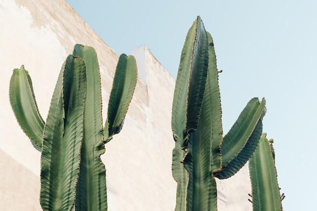 Cacti outdoors Free Photo