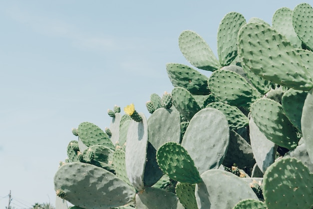 Cacti with a yellow flower Free Photo