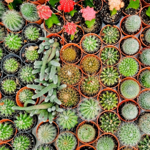 Cactus desert plant. Premium Photo