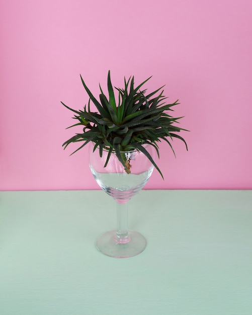 Cactus fashion design. minimal fashion stillife. trendy bright colors. Premium Photo