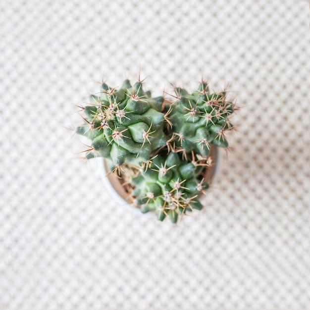 天然綿の麻ひもマットの敷物のポットの中のサボテン。緑の植物を使ったエコスタイル。手作りのモダンなマクラメ。ニットの家の装飾のコンセプト Premium写真