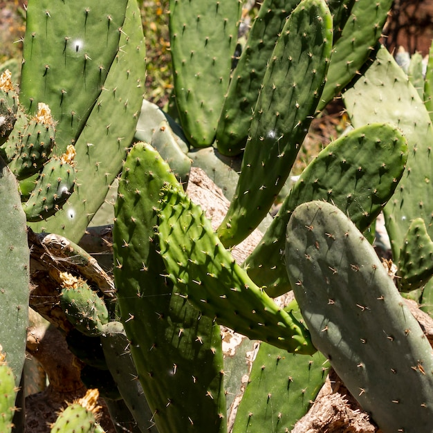 Cactus leaves in a summer day Free Photo