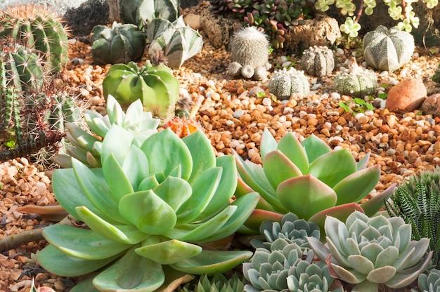 Cactus Mini Garden In Nursery Cactus Succulent Plantation Photo