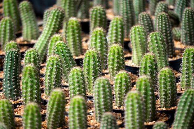 갈색 모래 녹색 식물 패턴 배경에 선인장 무료 사진
