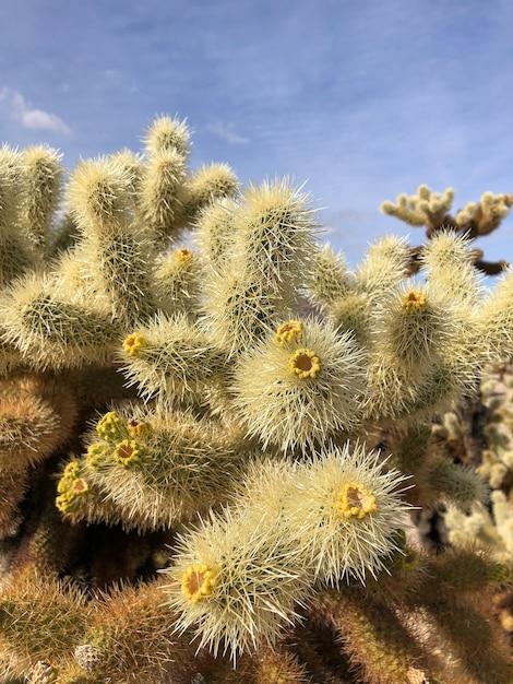 Кактус на сухой почве национального парка джошуа-три, сша Бесплатные Фотографии
