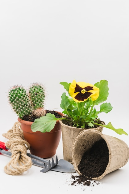 Cactus and pansy peat pot plant with gardening tools; soil and rope against white backdrop Free Photo